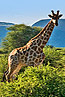 bongani Big5 Safari tour